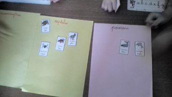 classification des animaux n°1