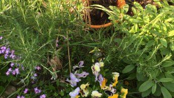 le jardin du printemps
